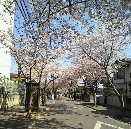 10412sakura2.jpg